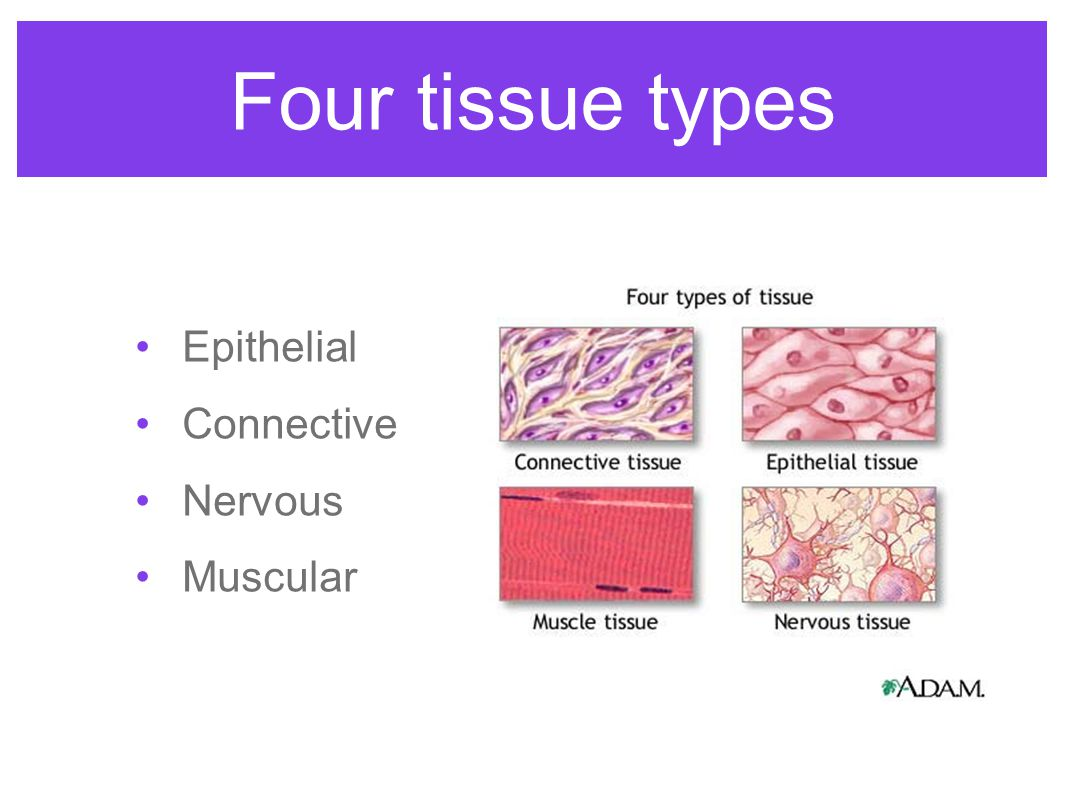4 things cells do to maintain homeostasis - 6