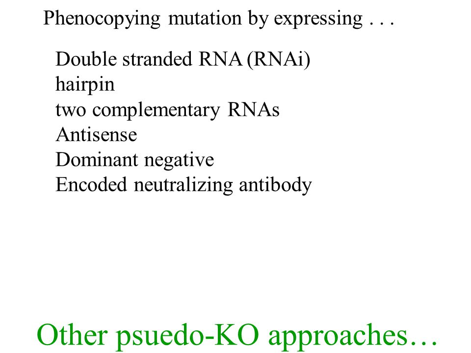 Phenocopying mutation by expressing...