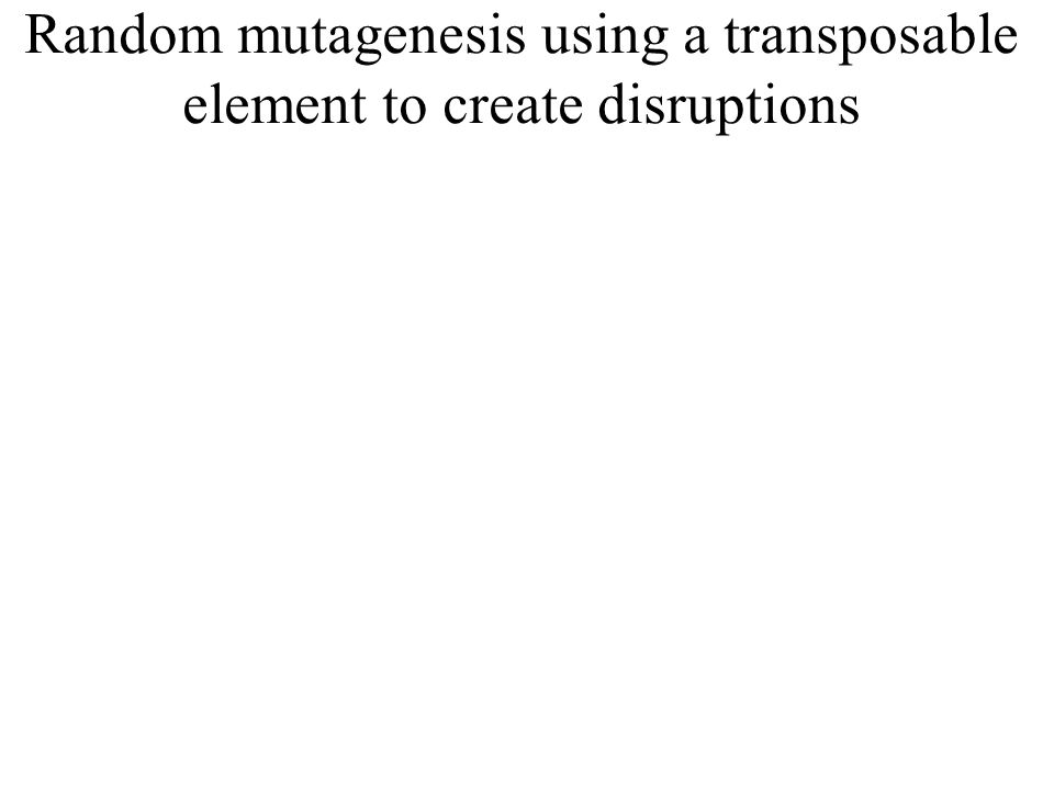 Random mutagenesis using a transposable element to create disruptions