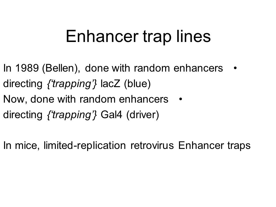Enhancer trap lines In 1989 (Bellen), done with random enhancers directing {'trapping'} lacZ (blue) Now, done with random enhancers directing {'trapping'} Gal4 (driver) In mice, limited-replication retrovirus Enhancer traps
