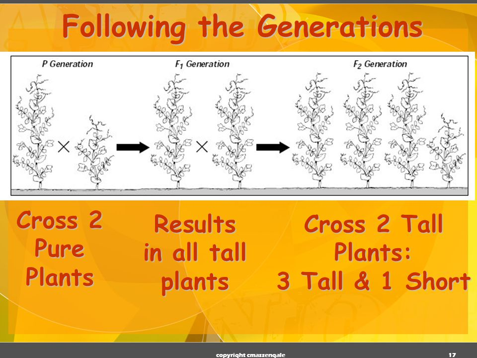 16 Generations Parental P 1 Generation F 1 generation (1st filial generation) From breeding individuals from the P 1 generation F 2 generation (2nd filial generation) the second-generation offspring in a breeding experiment.