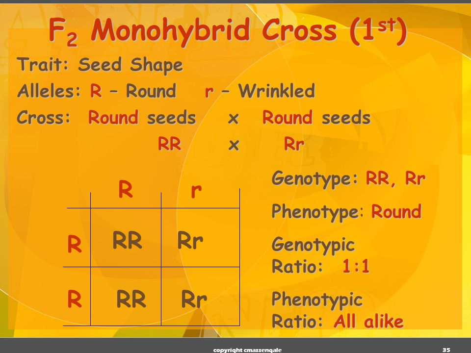 34 …And Now the Test Cross Mendel then crossed a pure & a hybrid from his F 2 generation This is known as an F 2 or test cross There are two possible testcrosses: Homozygous dominant x Hybrid Homozygous recessive x Hybrid copyright cmassengale