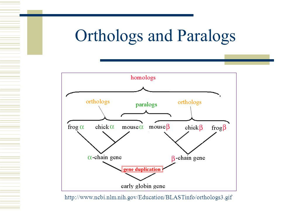 Orthologs and Paralogs