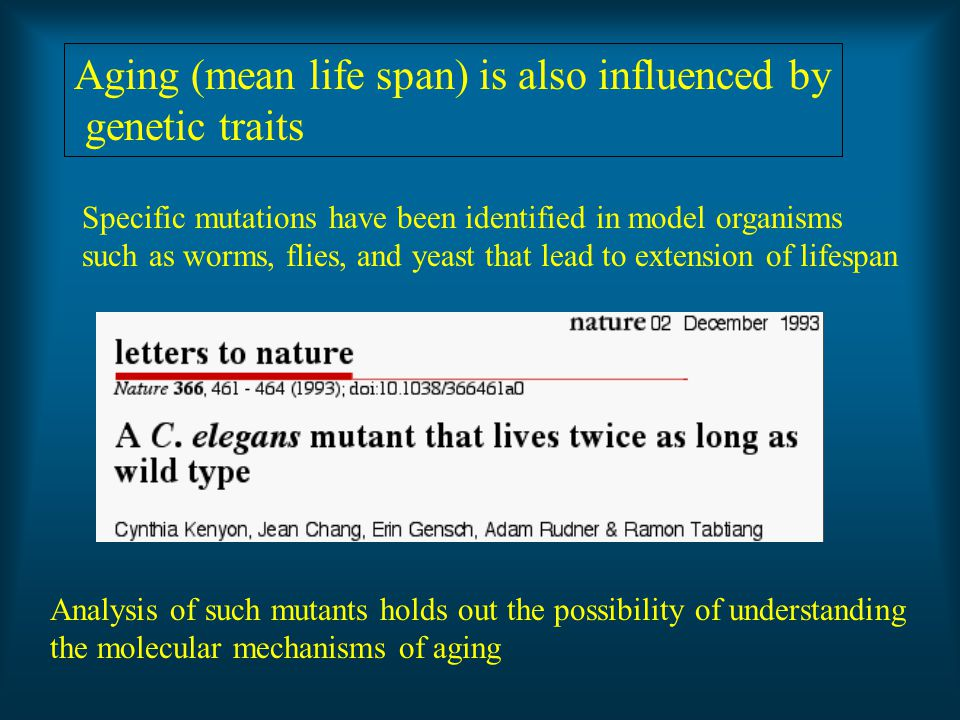 Aging (mean life span) is also influenced by genetic traits Specific mutations have been identified in model organisms such as worms, flies, and yeast that lead to extension of lifespan Analysis of such mutants holds out the possibility of understanding the molecular mechanisms of aging