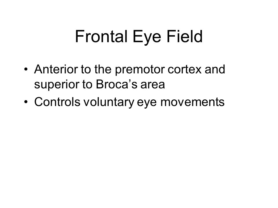 Frontal Eye Field Anterior to the premotor cortex and superior to Broca's area Controls voluntary eye movements