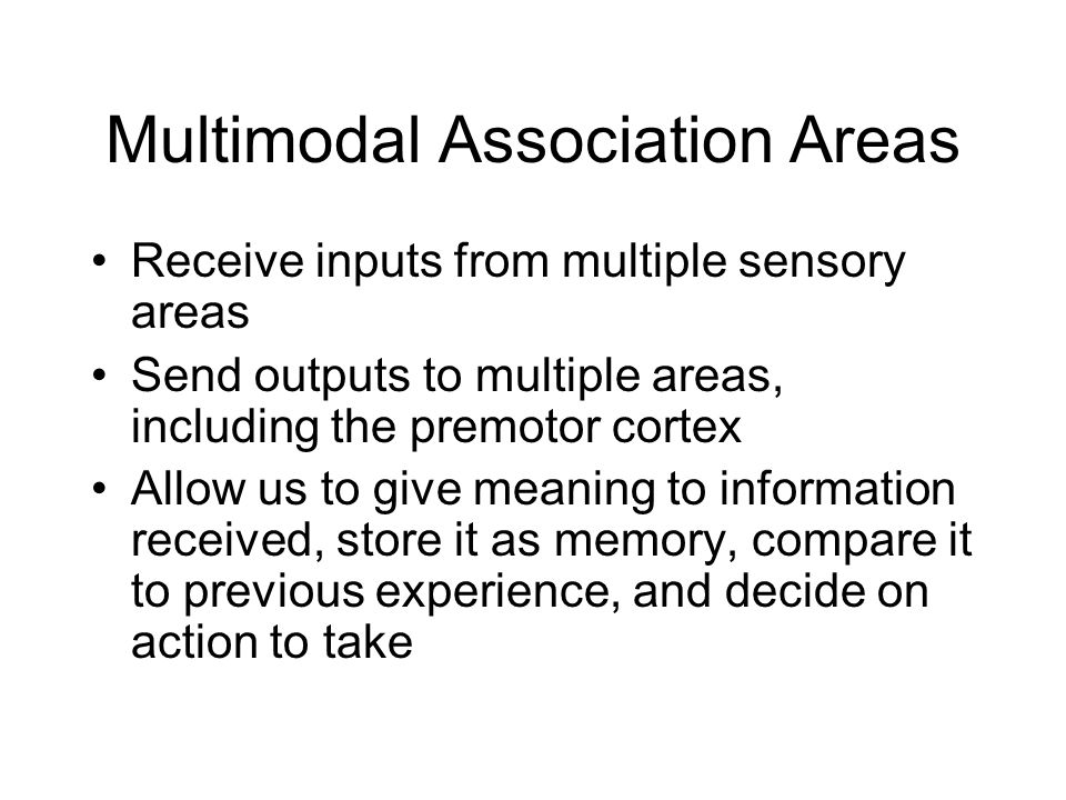 Multimodal Association Areas Receive inputs from multiple sensory areas Send outputs to multiple areas, including the premotor cortex Allow us to give