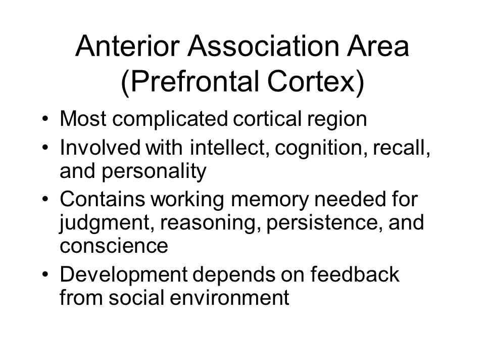 Anterior Association Area (Prefrontal Cortex) Most complicated cortical region Involved with intellect, cognition, recall, and personality Contains wo