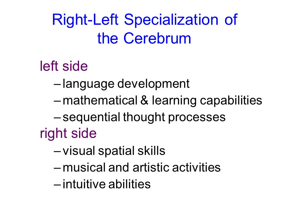Right-Left Specialization of the Cerebrum left side –language development –mathematical & learning capabilities –sequential thought processes right si