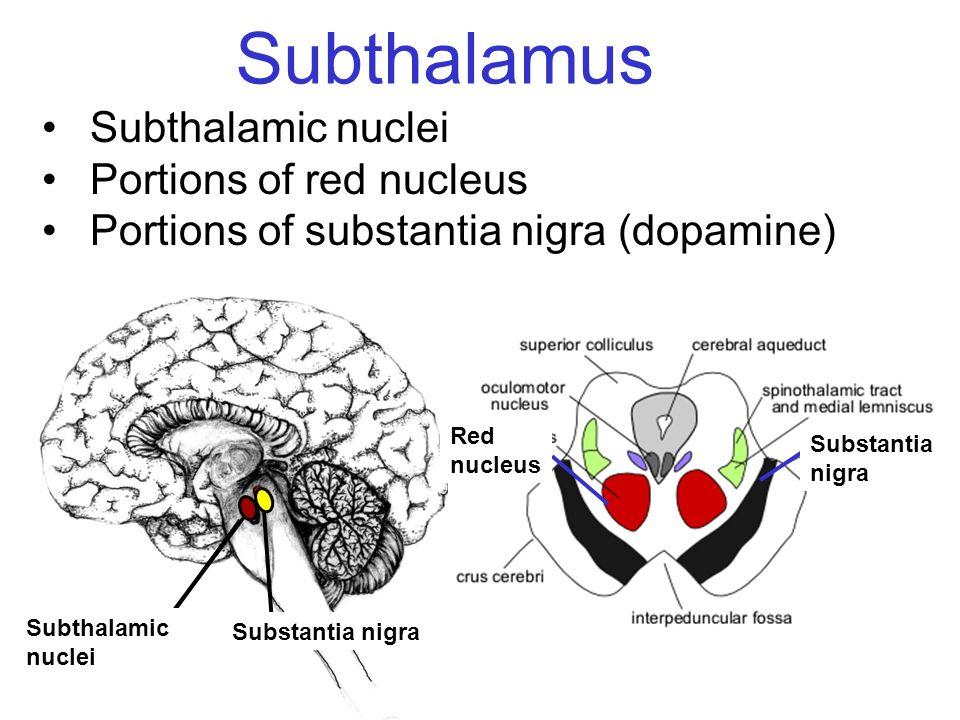Subthalamus Subthalamic nuclei Portions of red nucleus Portions of substantia nigra (dopamine) Substantia nigra Subthalamic nuclei Red nucleus Substan