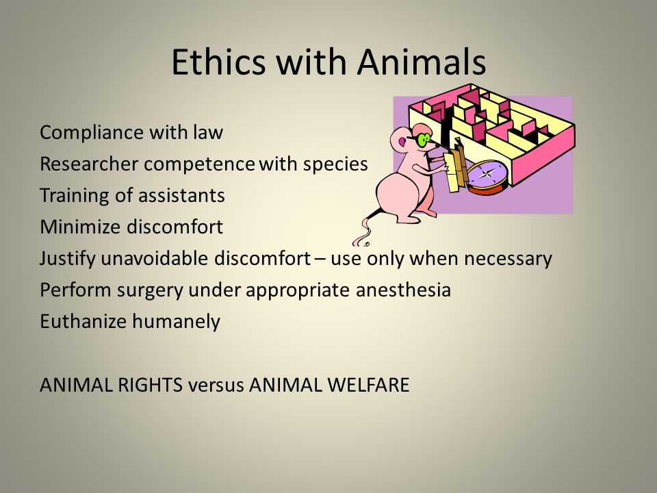 Ethics with Animals Compliance with law Researcher competence with species Training of assistants Minimize discomfort Justify unavoidable discomfort – use only when necessary Perform surgery under appropriate anesthesia Euthanize humanely ANIMAL RIGHTS versus ANIMAL WELFARE