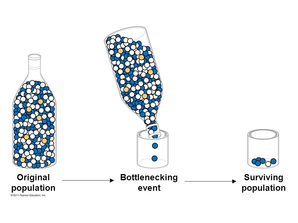Original population Bottlenecking event Surviving population