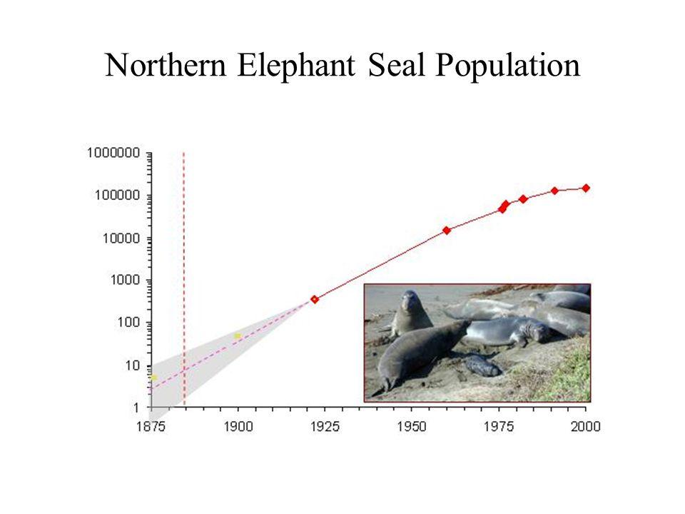 Northern Elephant Seal Population