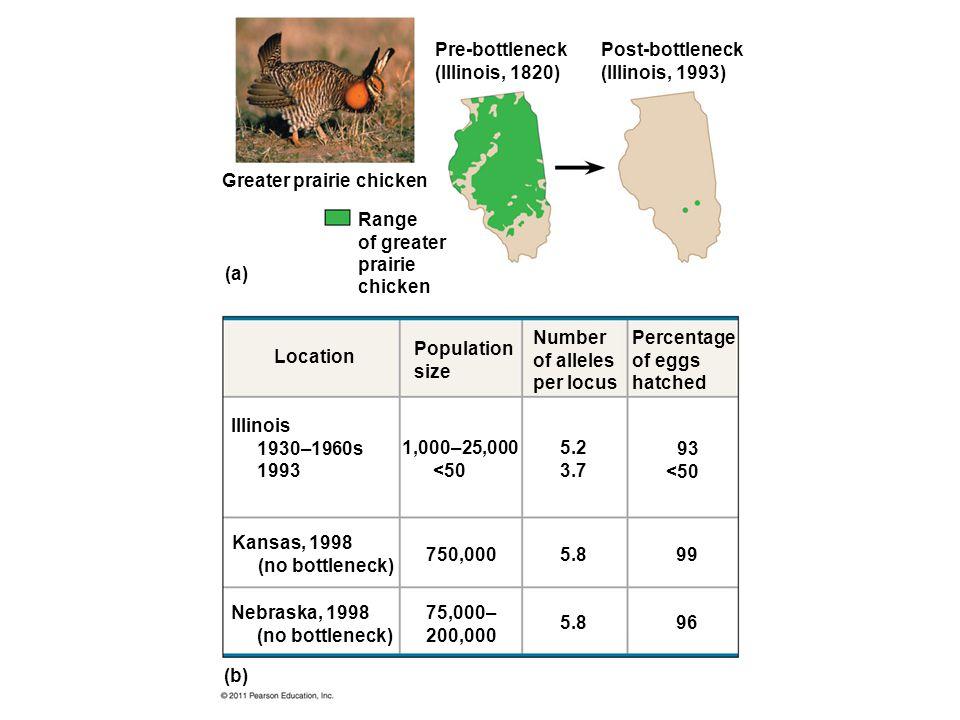 Pre-bottleneck (Illinois, 1820) Post-bottleneck (Illinois, 1993) Greater prairie chicken Range of greater prairie chicken (a) Location Population size Number of alleles per locus Percentage of eggs hatched 93 <50 5.2 3.7 5.8 99 96 1,000–25,000 <50 750,000 75,000– 200,000 Nebraska, 1998 (no bottleneck) (b) Kansas, 1998 (no bottleneck) Illinois 1930–1960s 1993