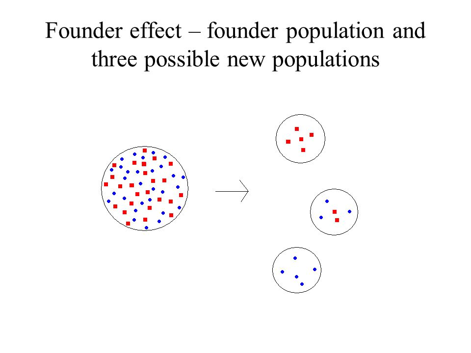 Founder effect – founder population and three possible new populations