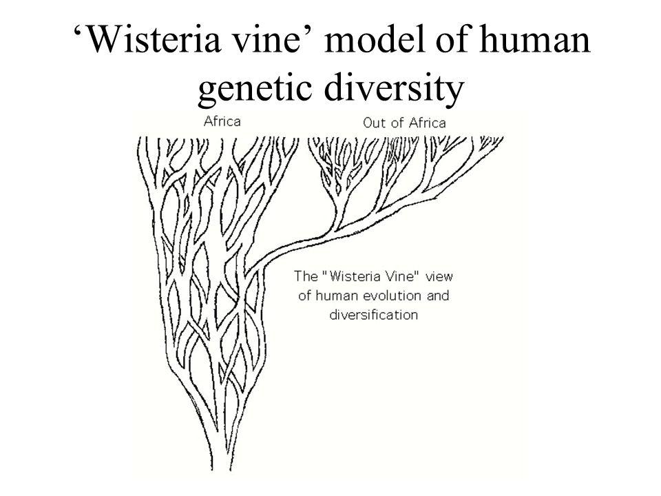 'Wisteria vine' model of human genetic diversity