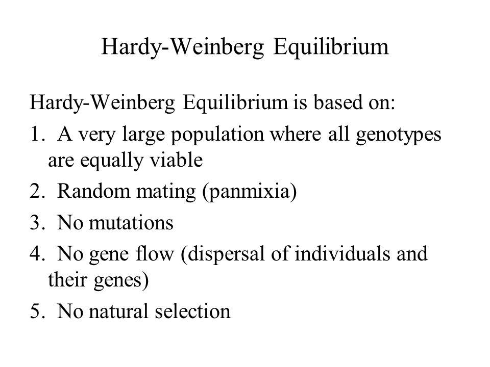 Hardy-Weinberg Equilibrium Hardy-Weinberg Equilibrium is based on: 1.