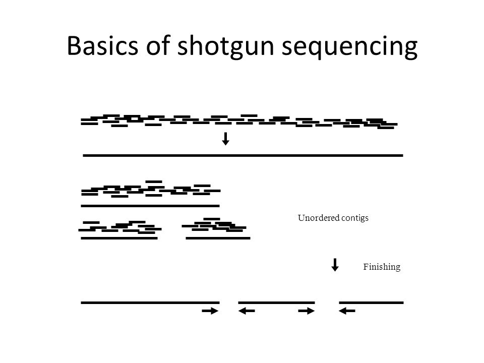 Basics of shotgun sequencing Unordered contigs Finishing