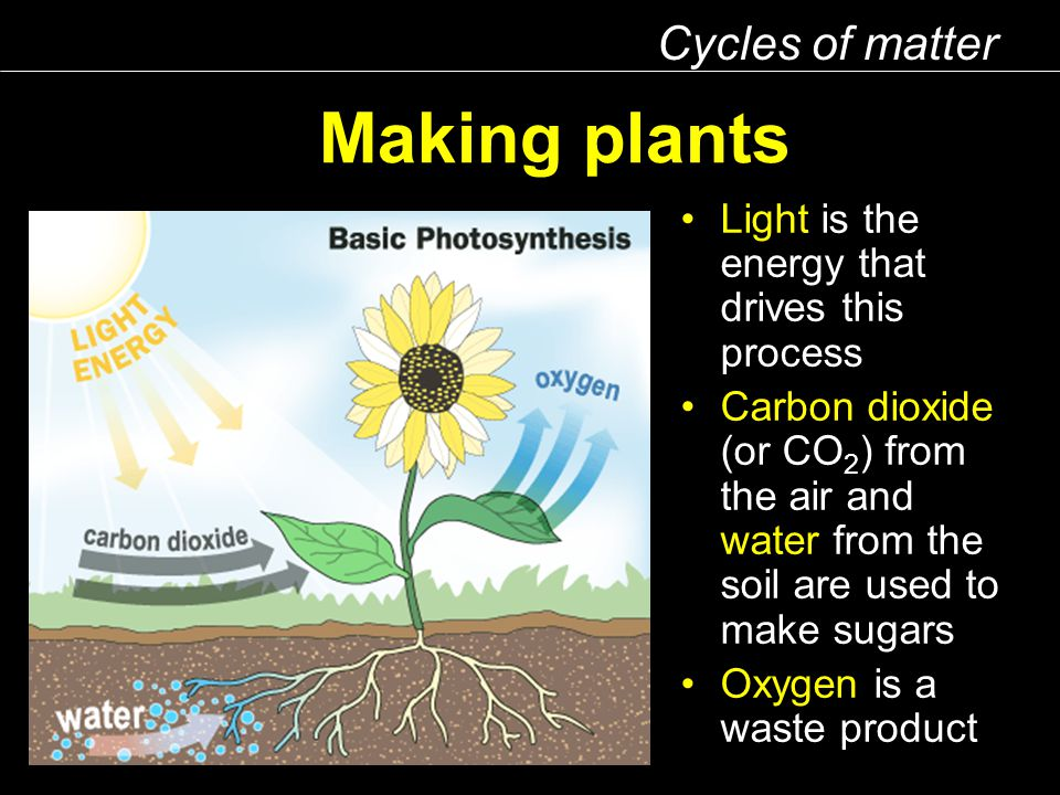 Making plants Cycles of matter Light is the energy that drives this process Carbon dioxide (or CO 2 ) from the air and water from the soil are used to make sugars Oxygen is a waste product