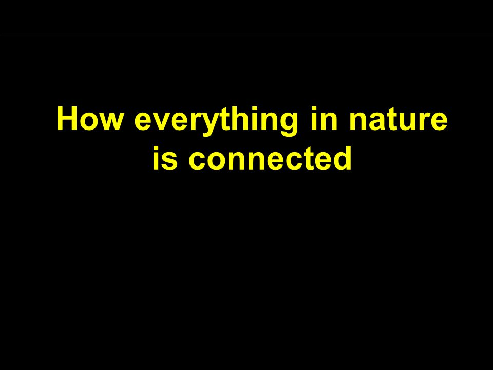 How everything in nature is connected