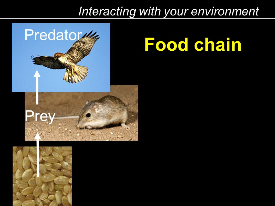 Food chain Interacting with your environment Predator Prey