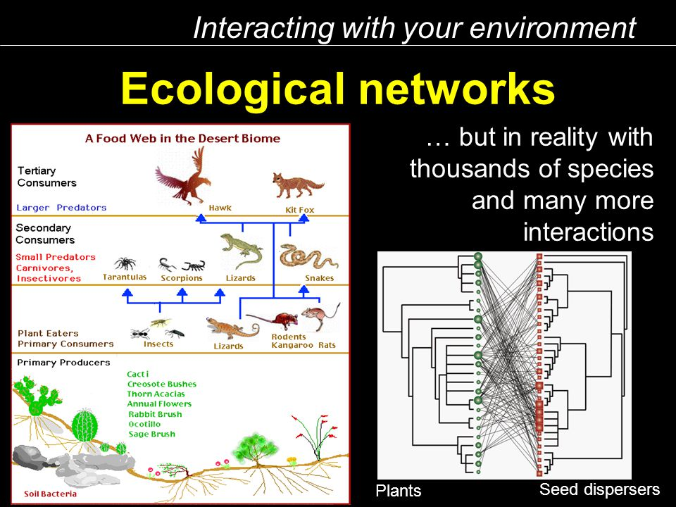 Ecological networks Seed dispersers Plants Interacting with your environment … but in reality with thousands of species and many more interactions