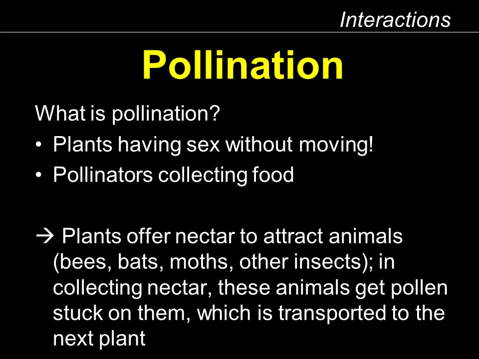 Interactions Pollination What is pollination. Plants having sex without moving.
