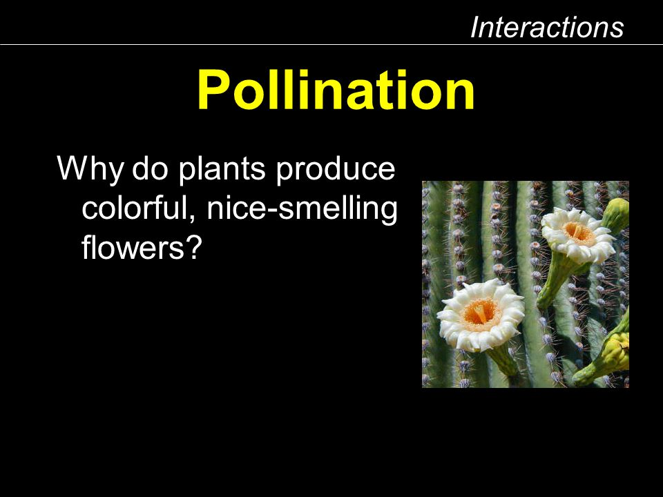 Interactions Pollination Why do plants produce colorful, nice-smelling flowers