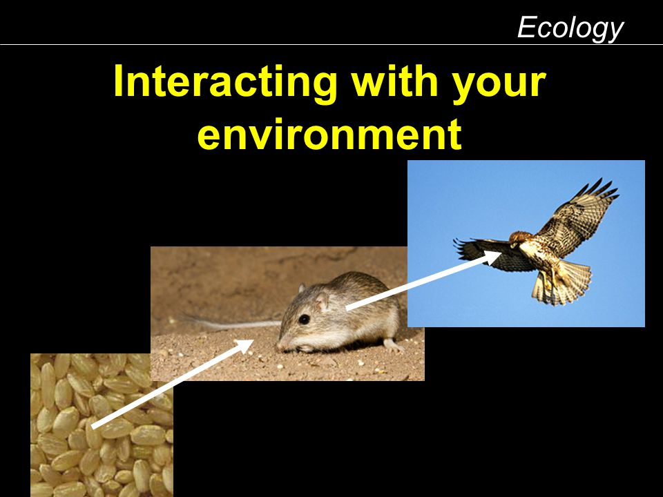Interacting with your environment Ecology