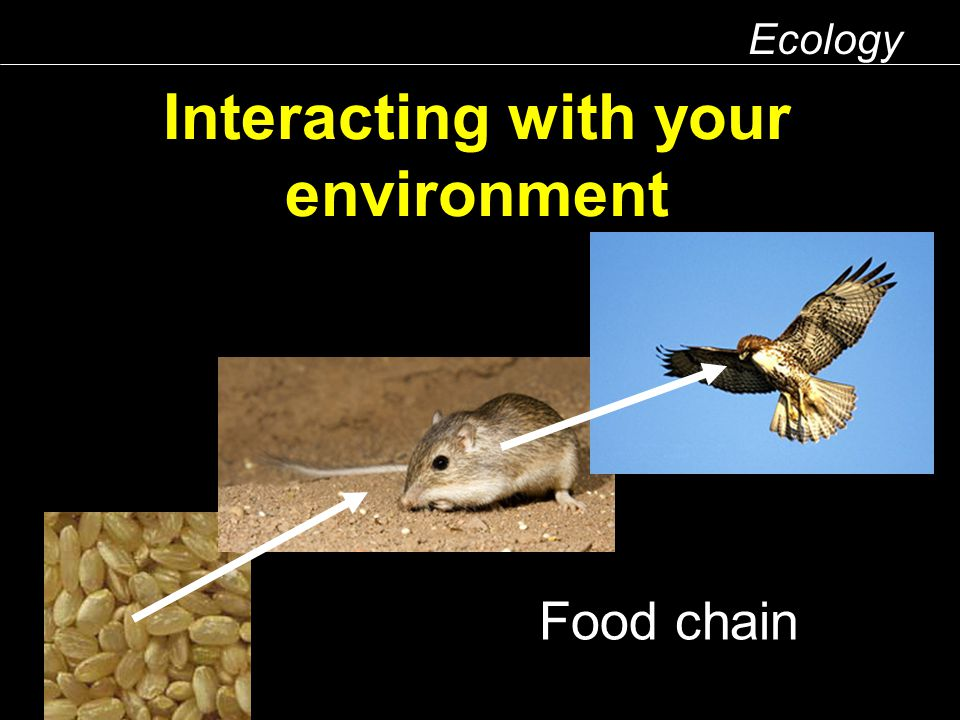 Interacting with your environment Ecology Food chain