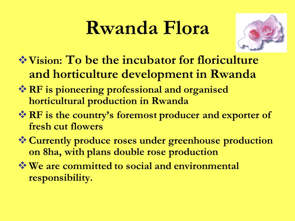 Rwanda Flora  Vision: To be the incubator for floriculture and horticulture development in Rwanda  RF is pioneering professional and organised horticultural production in Rwanda  RF is the country's foremost producer and exporter of fresh cut flowers  Currently produce roses under greenhouse production on 8ha, with plans double rose production  We are committed to social and environmental responsibility.
