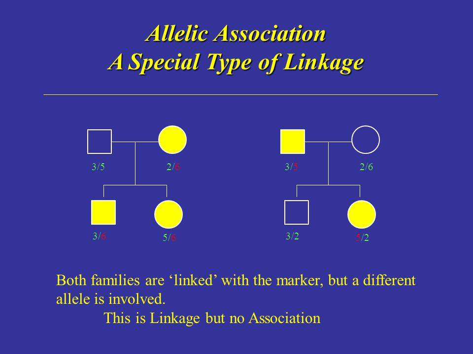 Allelic Association A Special Type of Linkage 3/52/6 3/2 5/2 3/52/6 3/6 5/6 Both families are 'linked' with the marker, but a different allele is involved.