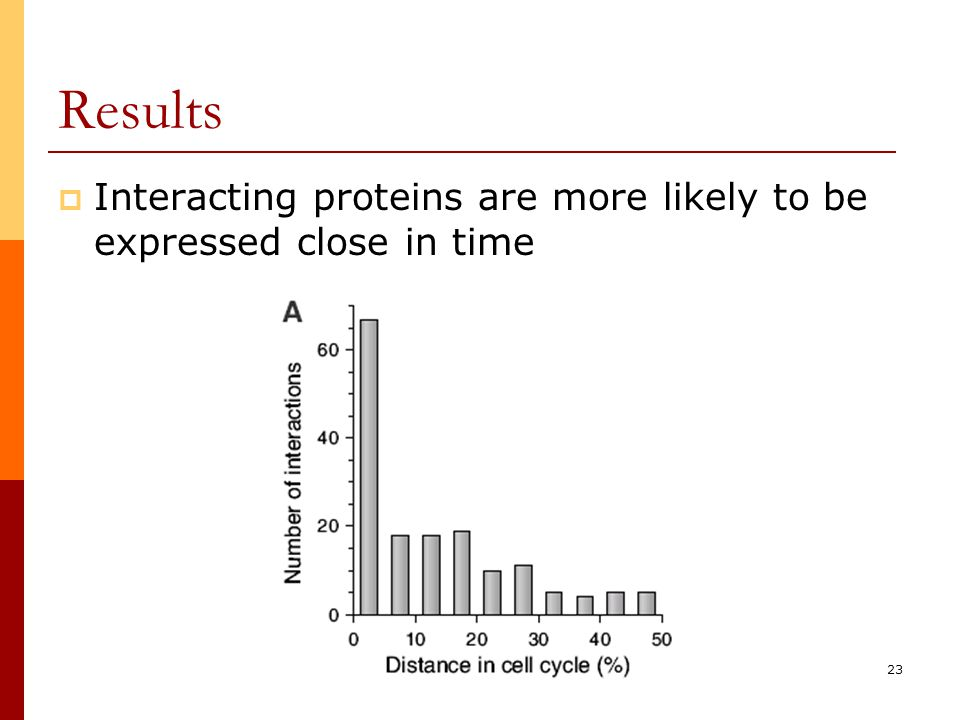 23 Results  Interacting proteins are more likely to be expressed close in time
