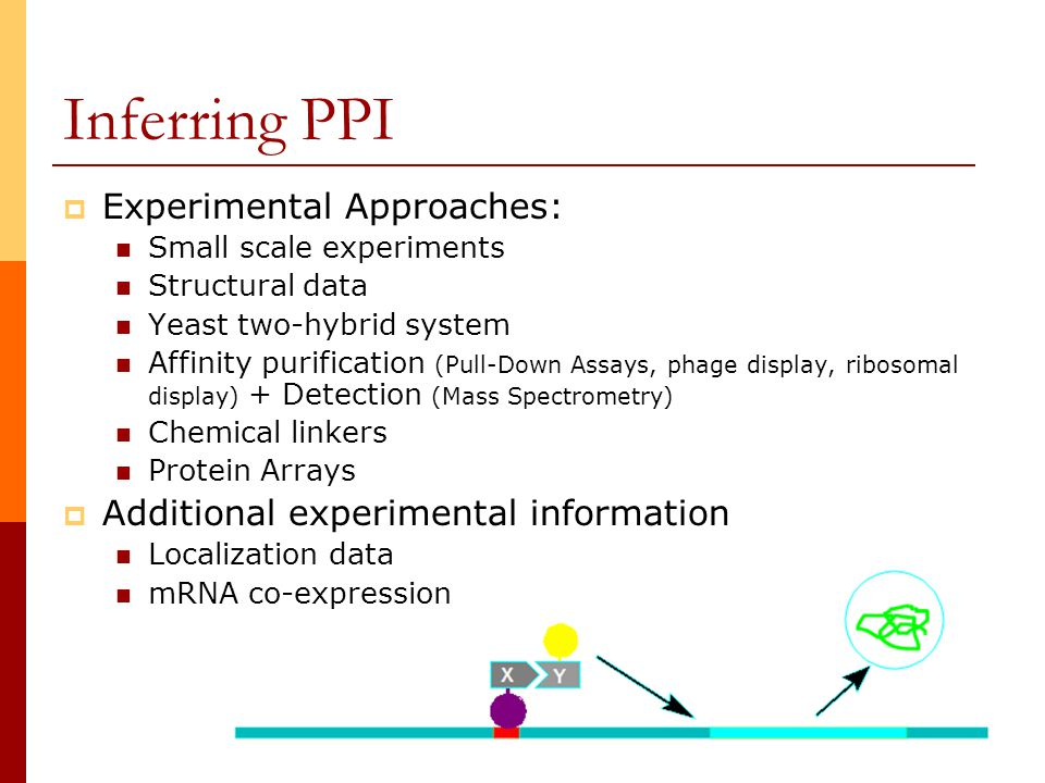 4 Inferring PPI  Experimental Approaches: Small scale experiments Structural data Yeast two-hybrid system Affinity purification (Pull-Down Assays, phage display, ribosomal display) + Detection (Mass Spectrometry) Chemical linkers Protein Arrays  Additional experimental information Localization data mRNA co-expression