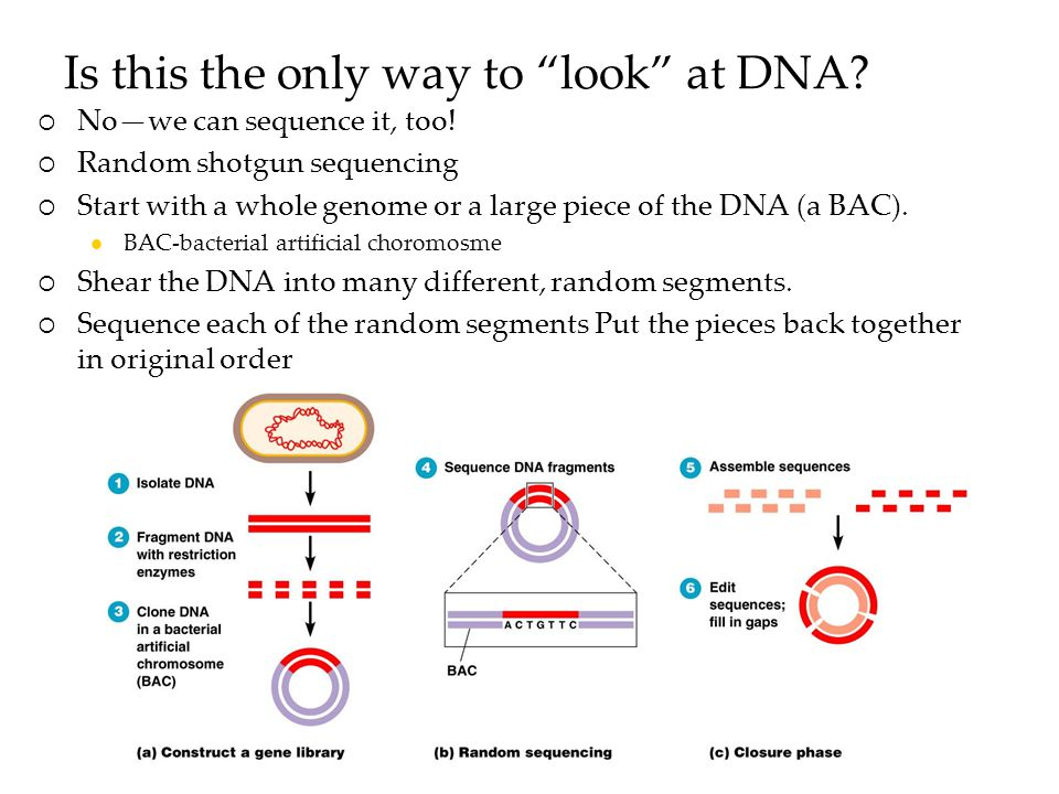 Is this the only way to look at DNA.  No—we can sequence it, too.