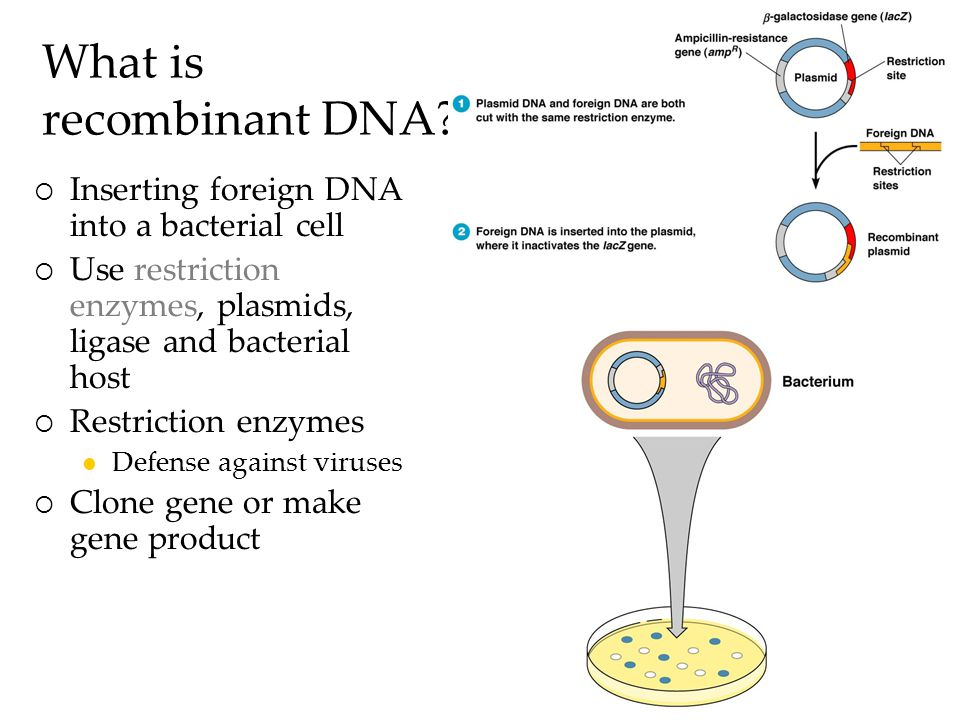 What is recombinant DNA.