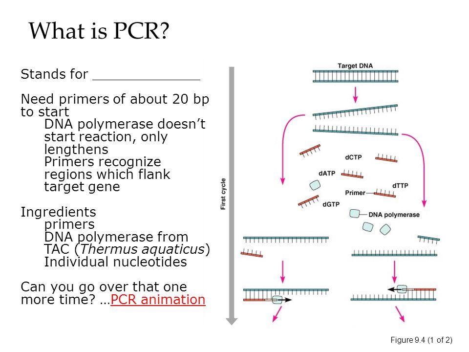 What is PCR.