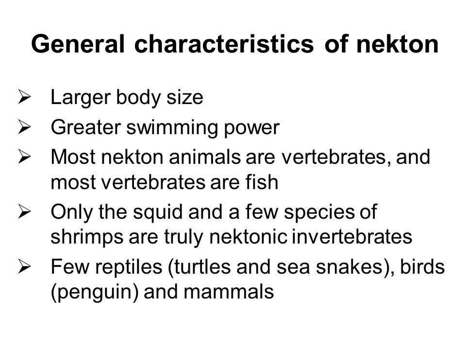 Nekton Fish of nekton   Larger body