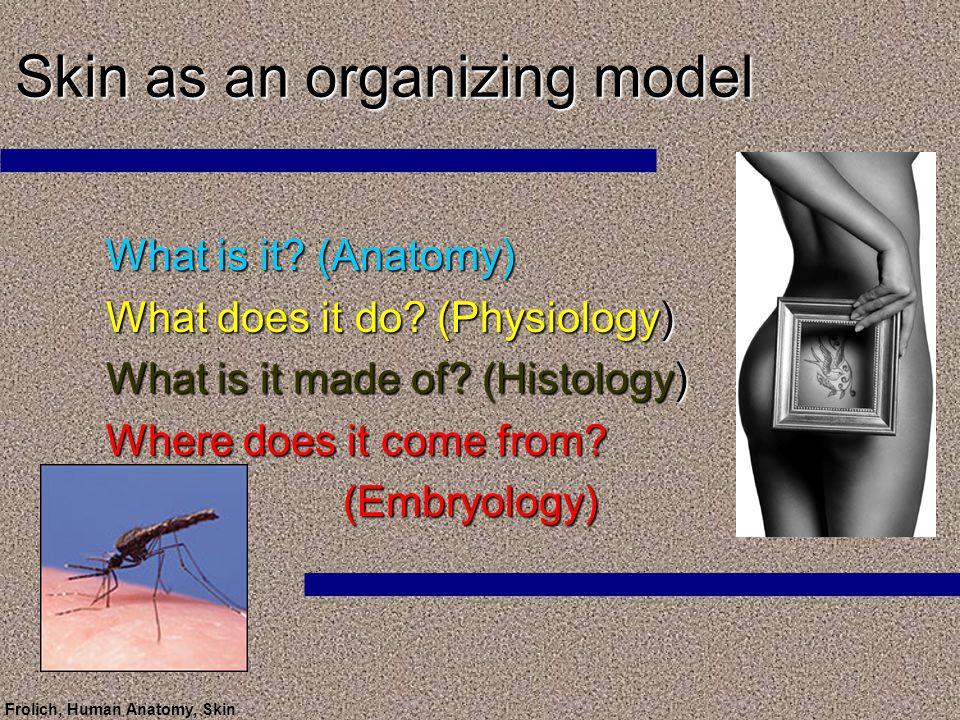 Frolich Human Anatomy Skin Skin As An Organizing Model What Is It