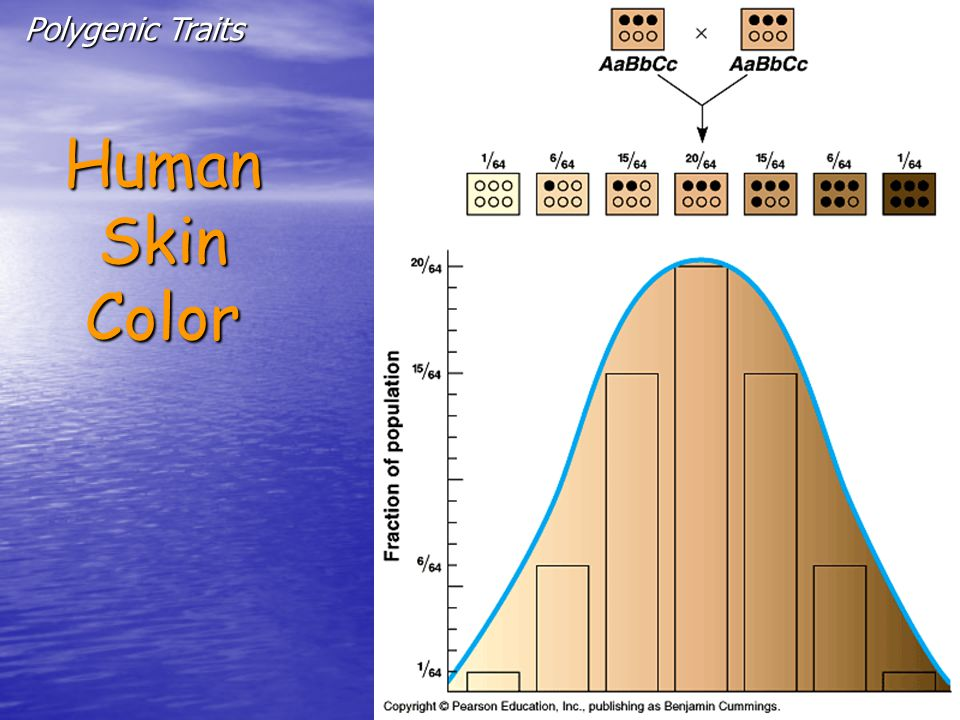 HumanSkinColor Polygenic Traits