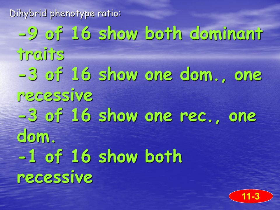 -9 of 16 show both dominant traits -3 of 16 show one dom., one recessive -3 of 16 show one rec., one dom.