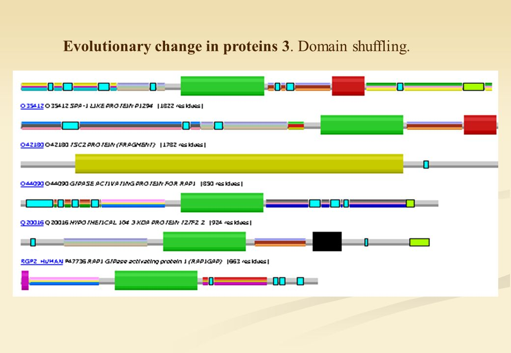 Evolutionary change in proteins 3. Domain shuffling.