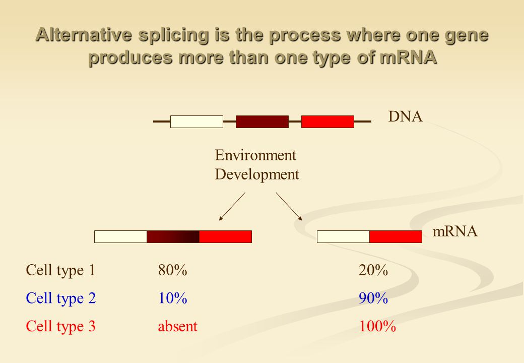 Environment Development Alternative splicing is the process where one gene produces more than one type of mRNA DNA mRNA 80%20%Cell type 1 10%90%Cell type 2 absent100%Cell type 3