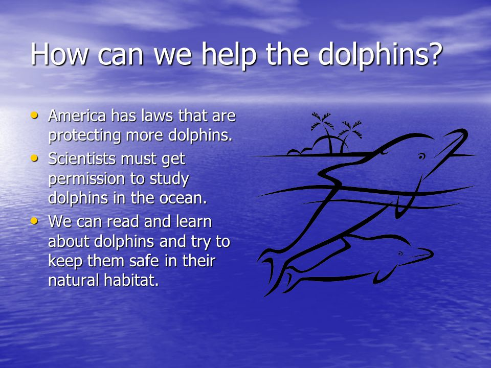How can we help the dolphins.America has laws that are protecting more dolphins.