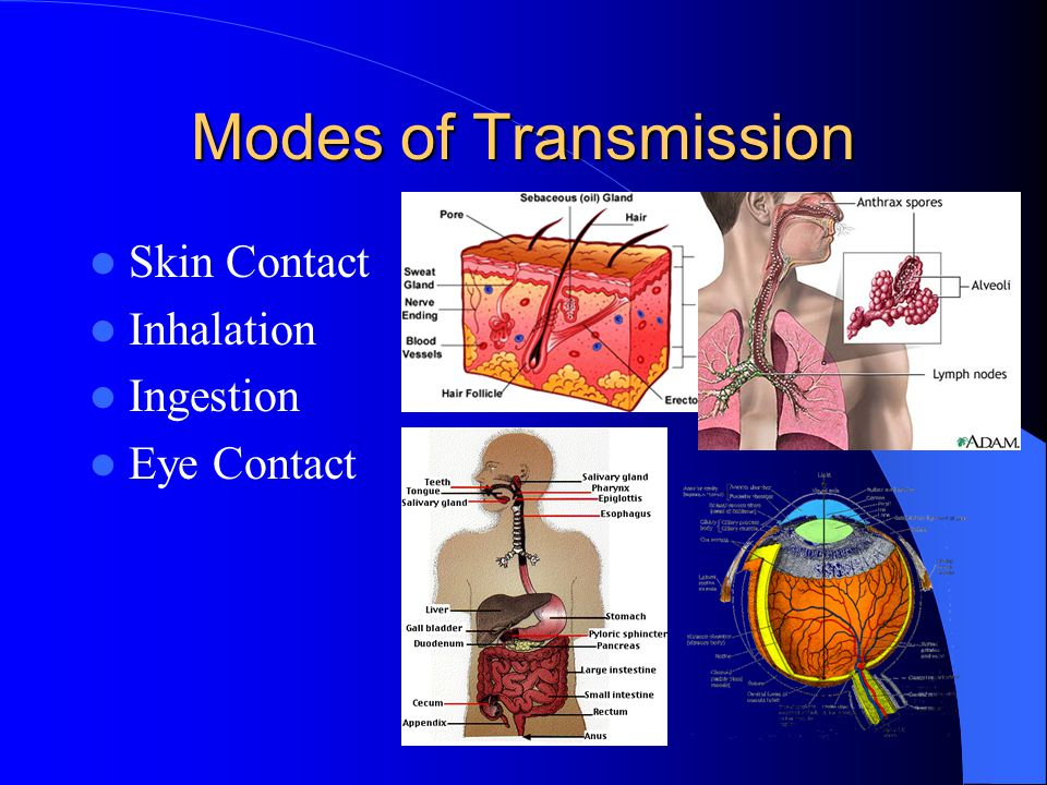 Modes of Transmission Skin Contact Inhalation Ingestion Eye Contact