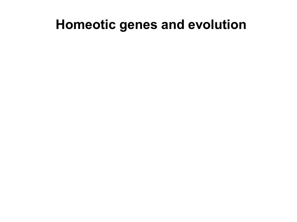 Homeotic genes and evolution