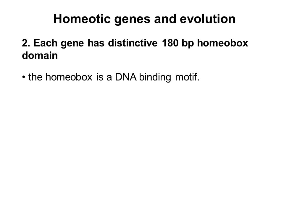 Homeotic genes and evolution 2.