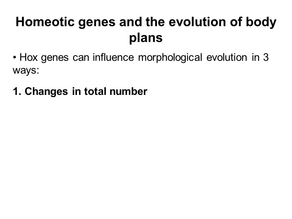 Homeotic genes and the evolution of body plans Hox genes can influence morphological evolution in 3 ways: 1.