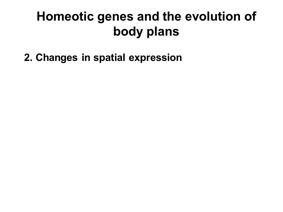Homeotic genes and the evolution of body plans 2. Changes in spatial expression