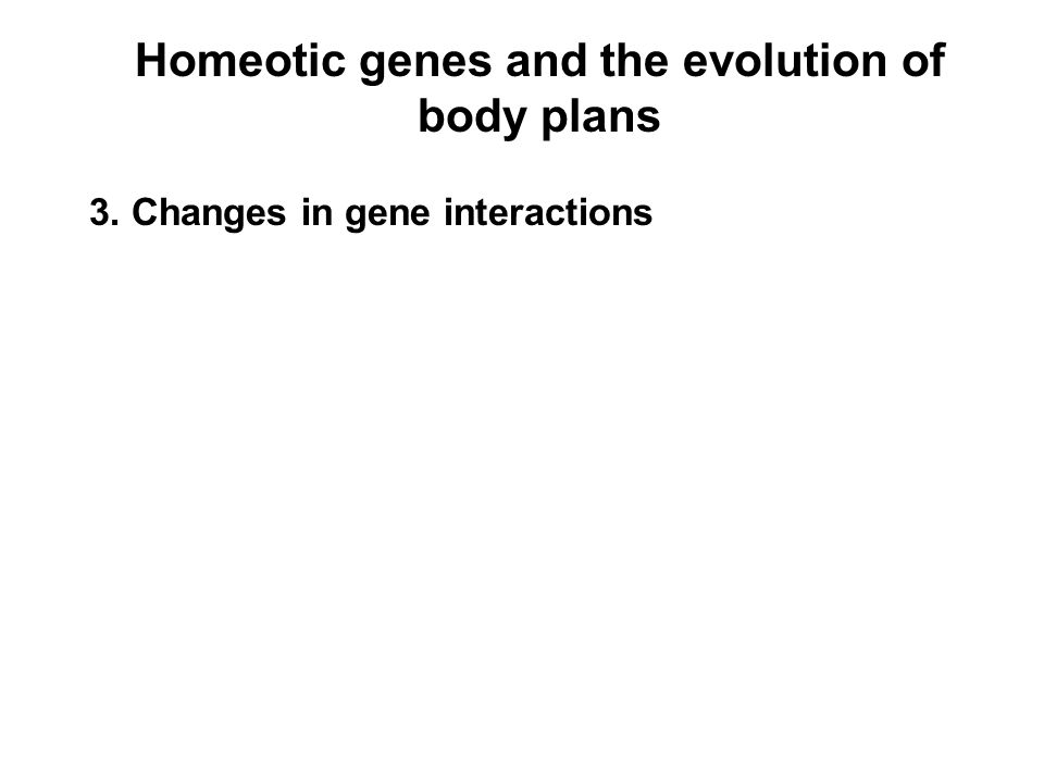 Homeotic genes and the evolution of body plans 3. Changes in gene interactions