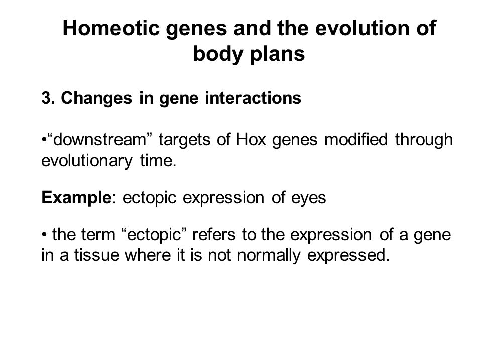 Homeotic genes and the evolution of body plans 3.